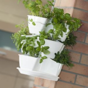Arredare con piante e fiori arredamento e casa for Arredare casa con le piante